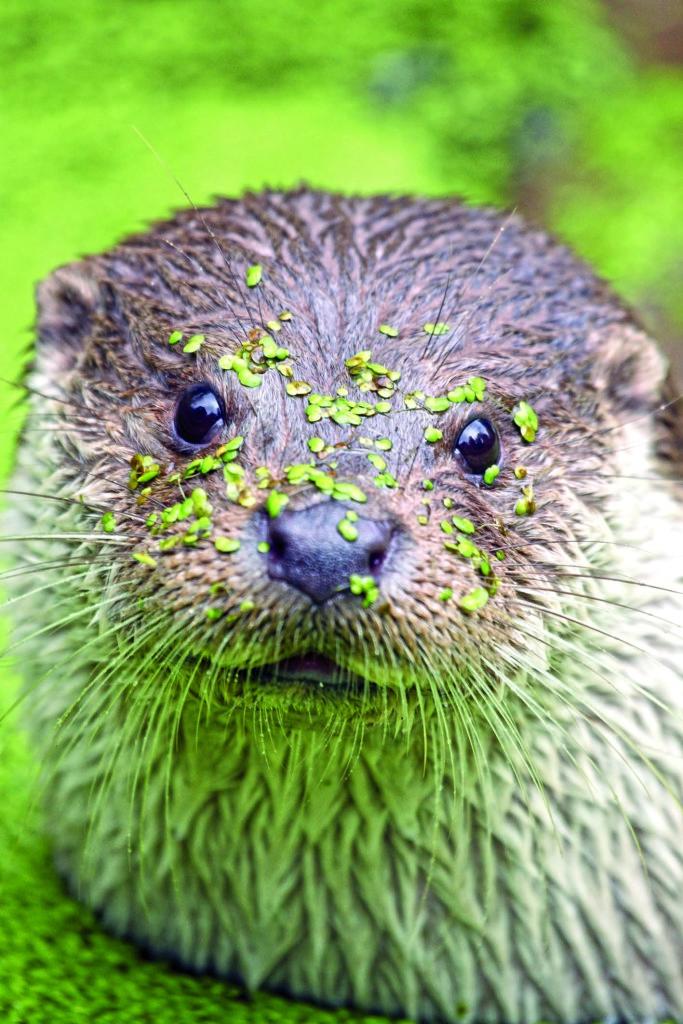 Otter_Wald-d-Zukunft-Teichlinse_4929-1