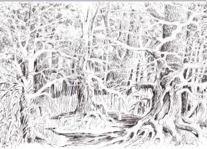 Zeichnung Zauberwald 160910