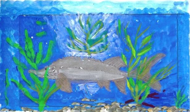 Foto der Zeichnung (Aquarell) eines Großraum-Aquariums mit einem Europäischen Hausen von Karin Lein, Deggendorf
