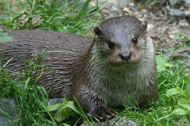 Otter_Wald-d-Zukunft-Gewässer_1