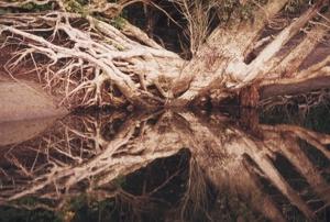 Foto eines Zauber- und Feenwaldes