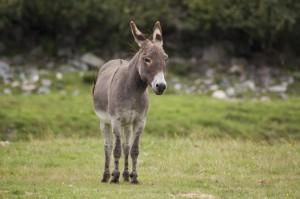 donkey-esel_022020